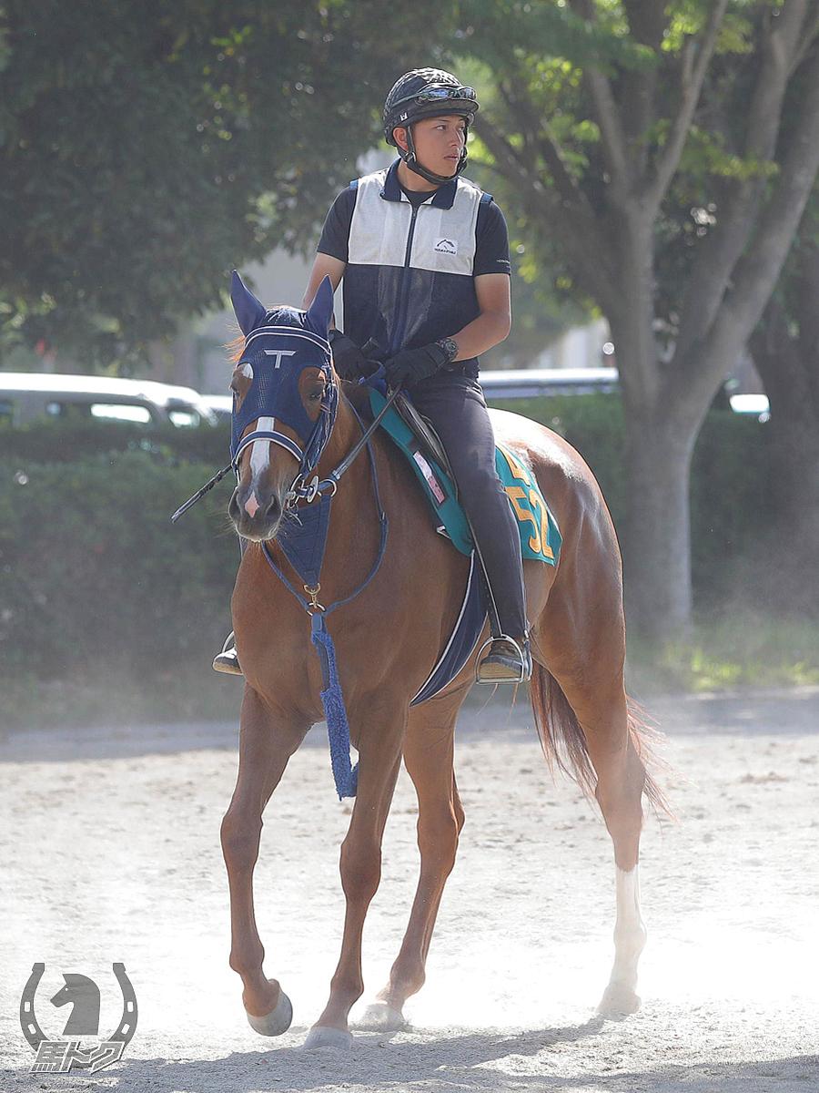 ネージュフォレストの馬体写真