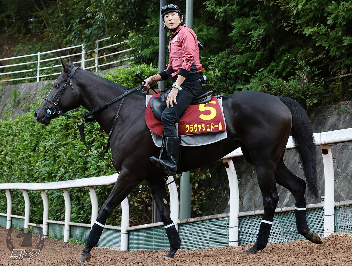 クラヴァシュドールの馬体写真