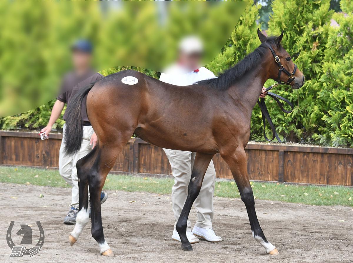 シャドウブロッサムの馬体写真