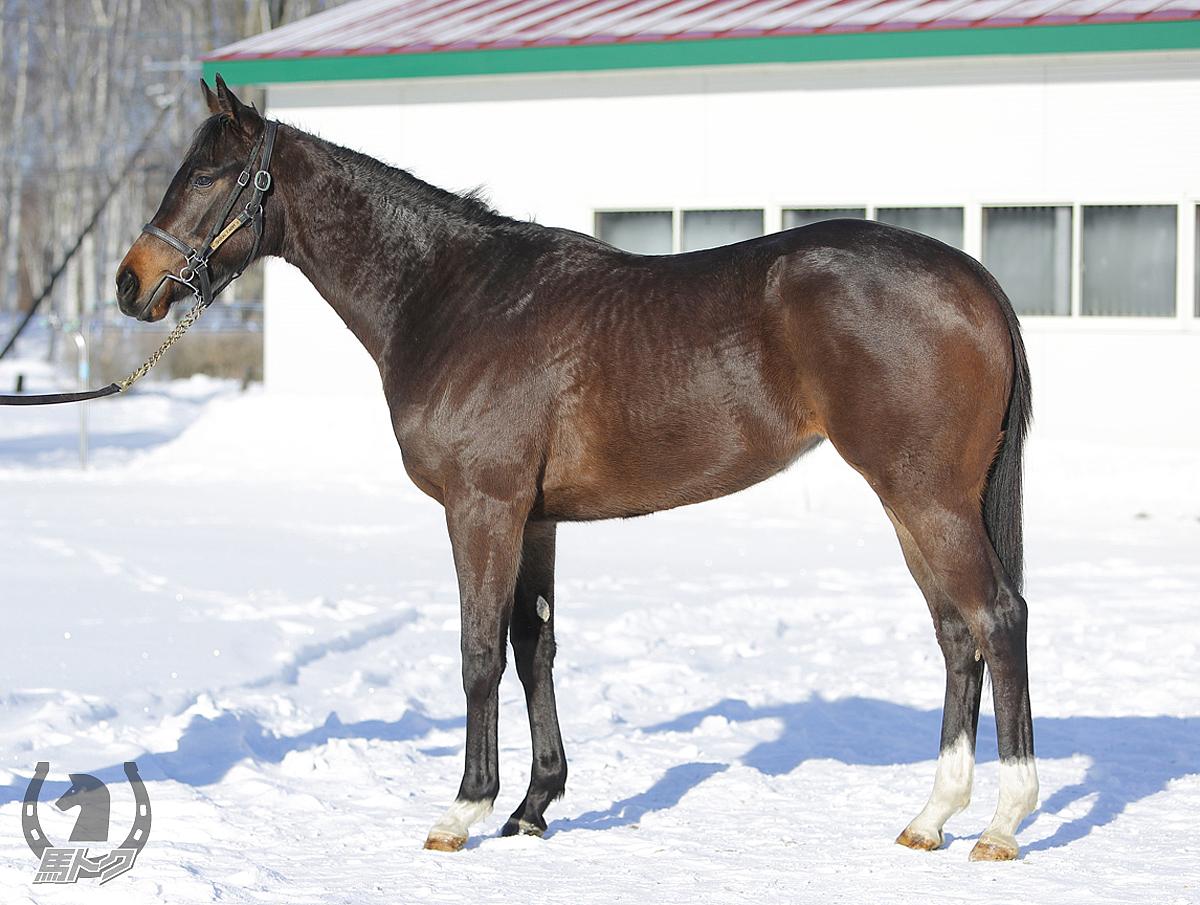 フェードインの馬体写真
