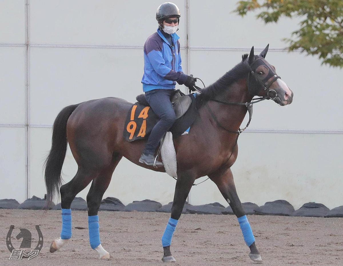 リスペクトの馬体写真