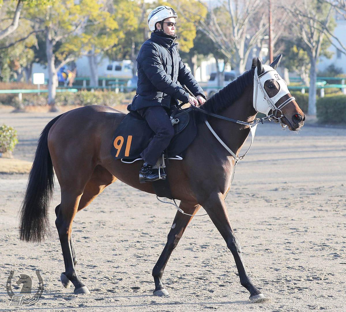 アールクインダムの馬体写真