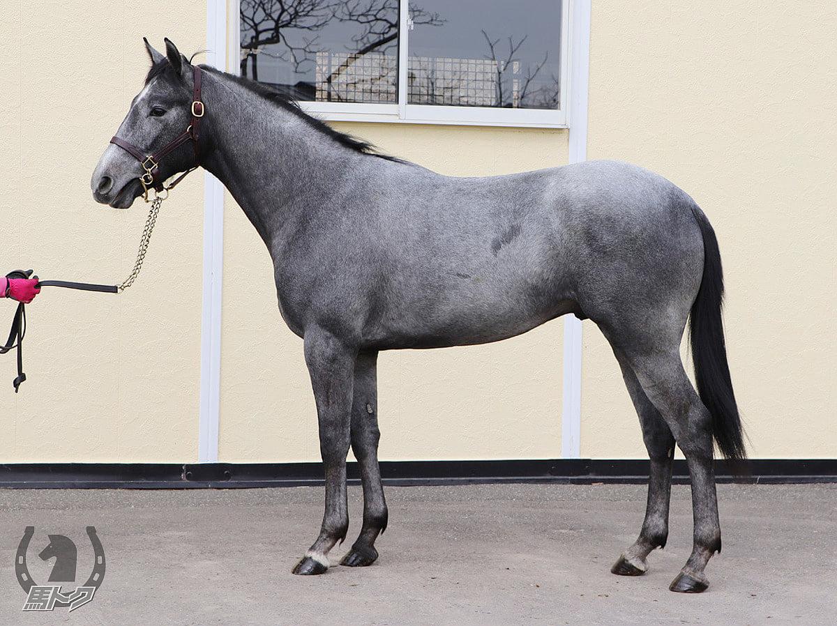 ヴァリアントナイトの馬体写真