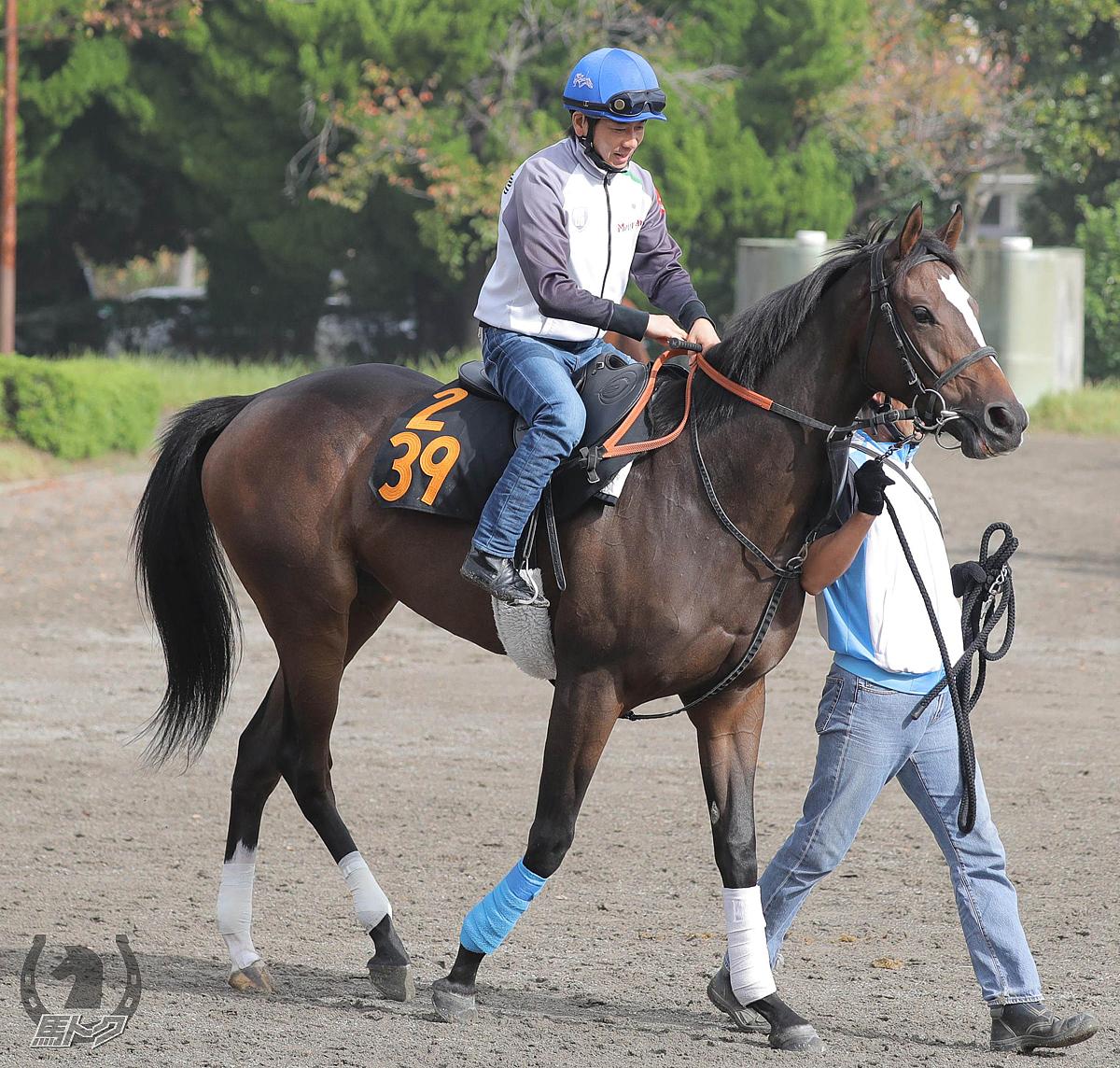 カイトレッドの馬体写真