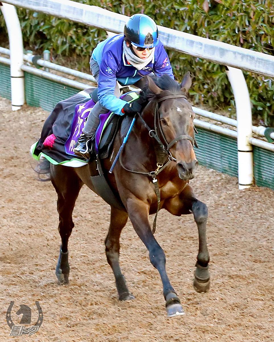 デアリングタクトの馬体写真