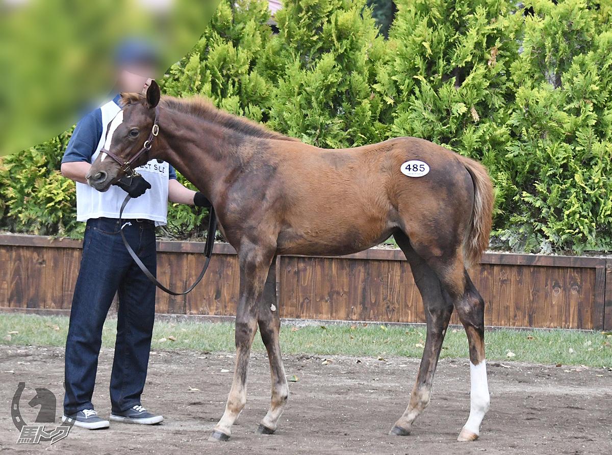 キアナポラリスの馬体写真