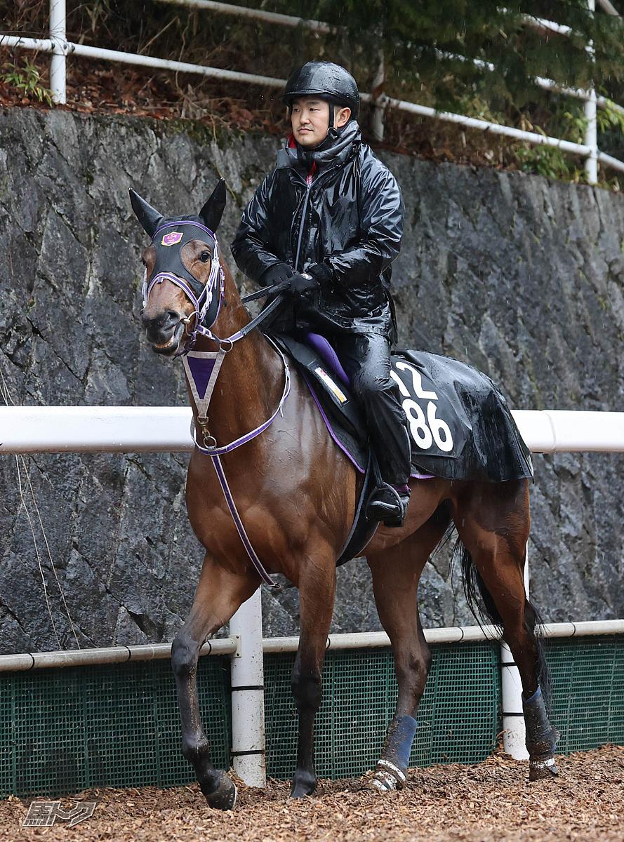 ルーチェデラヴィタの馬体写真