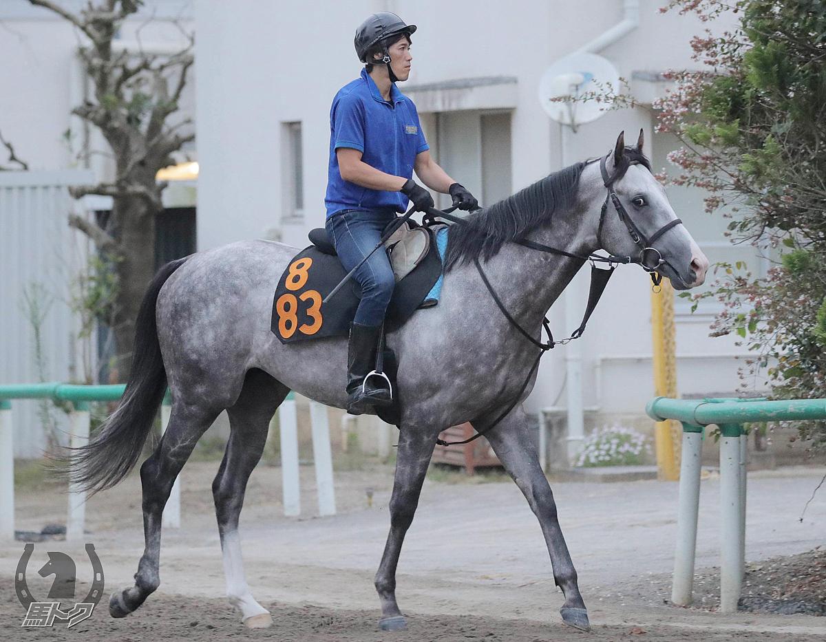 デルマオニキスの馬体写真