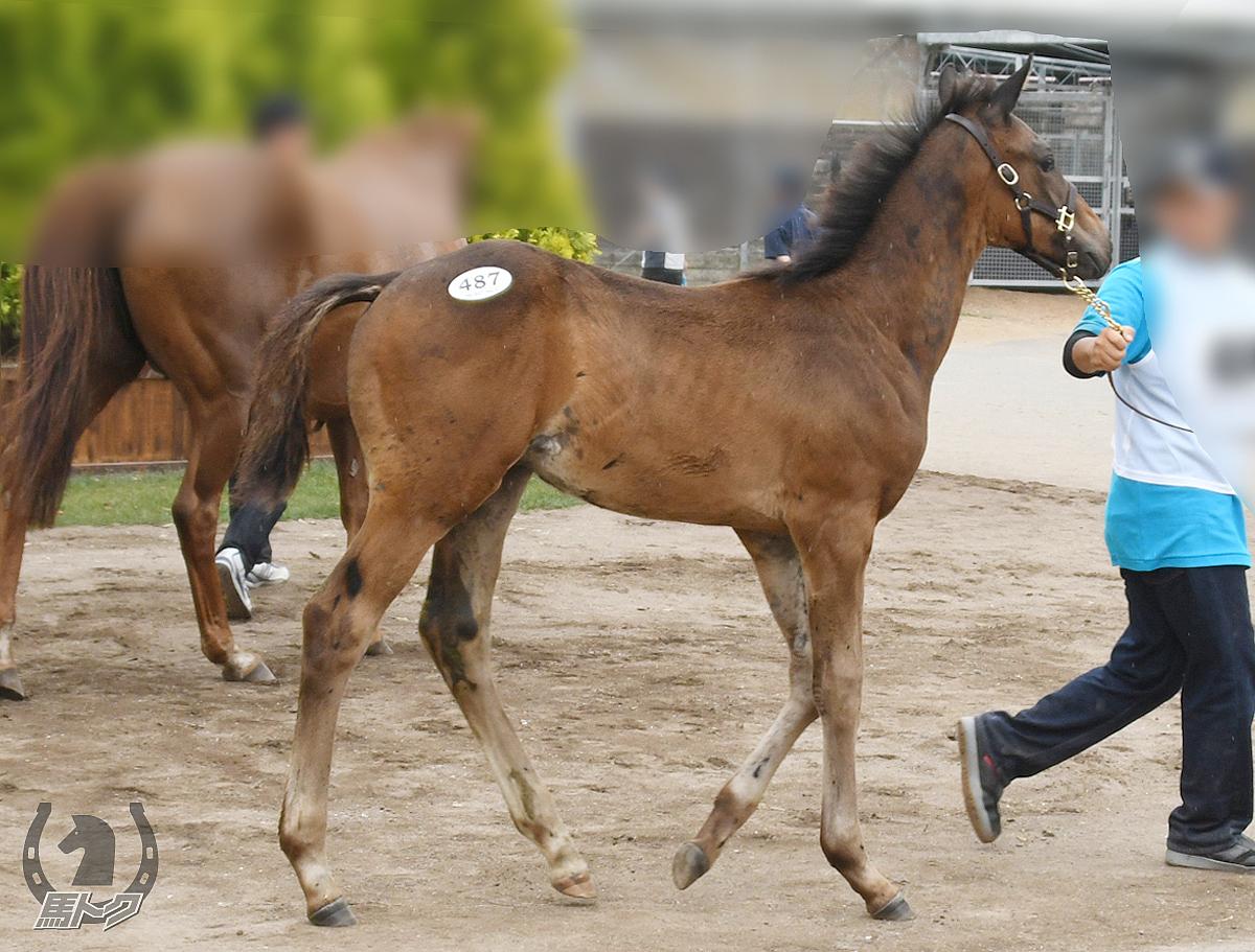 ドンベリーニの馬体写真