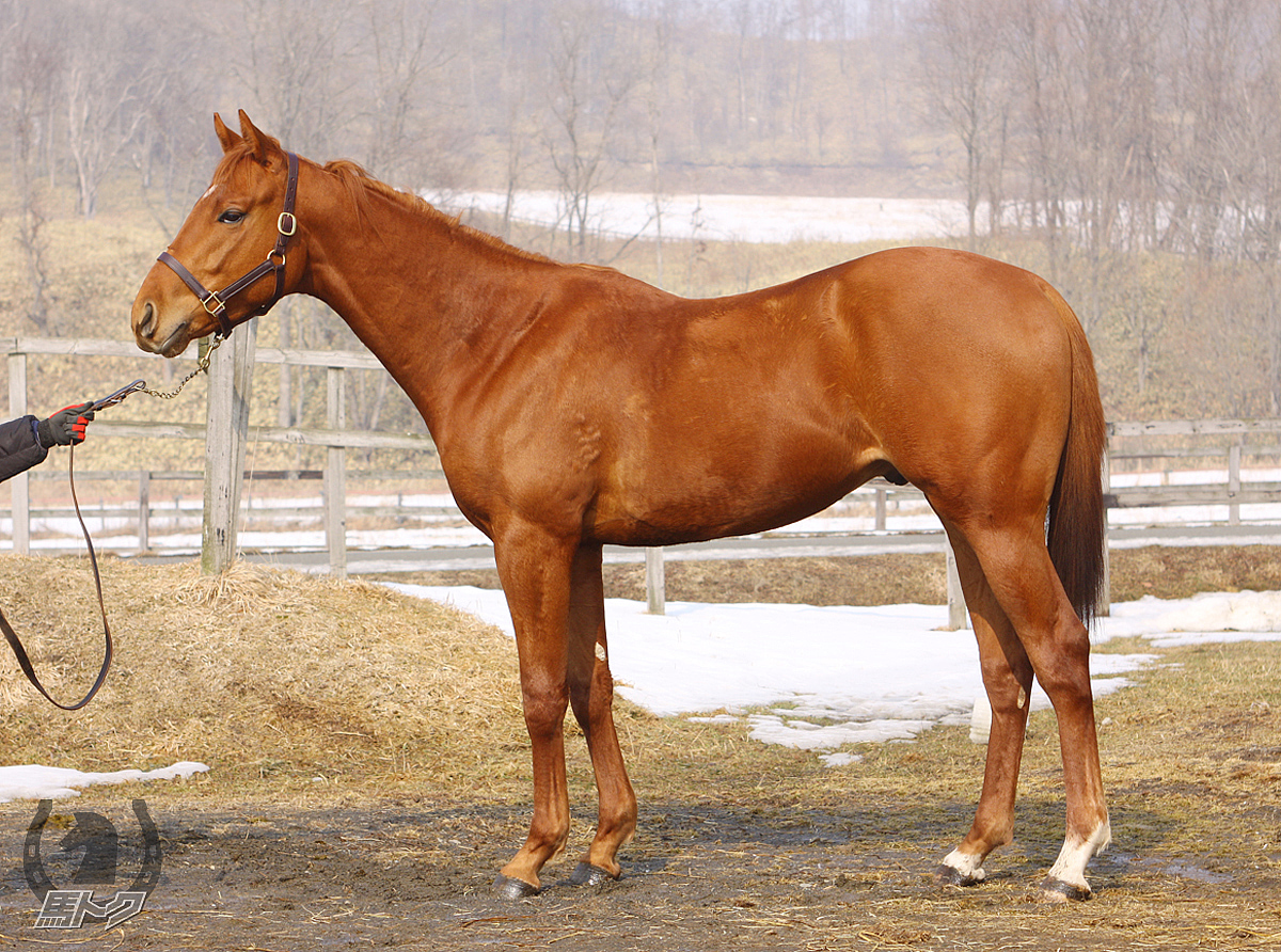 ルーレットエルフの馬体写真