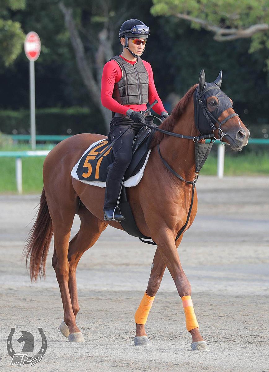 アポロアベリアの馬体写真