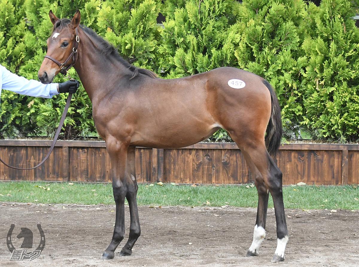 グレースルビーの馬体写真