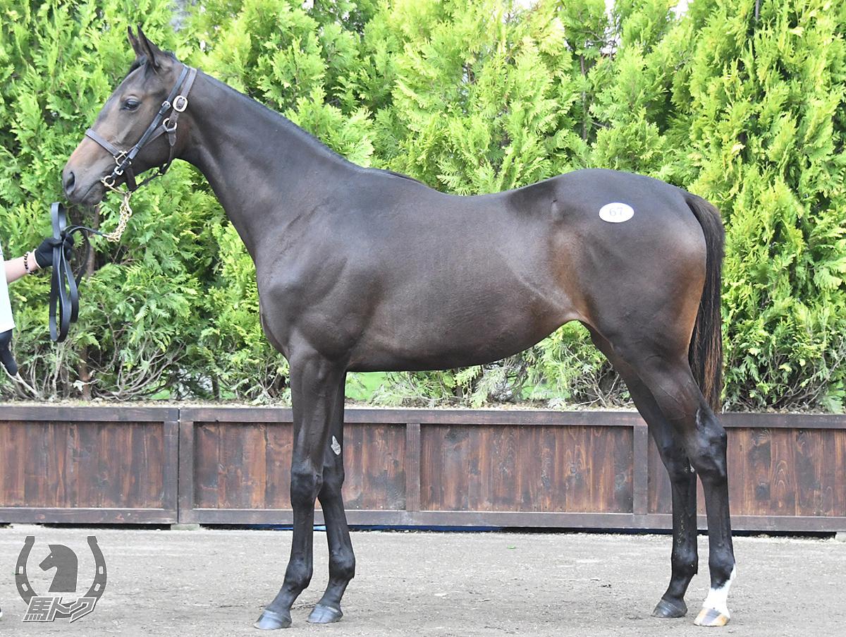 セーチェーニの馬体写真