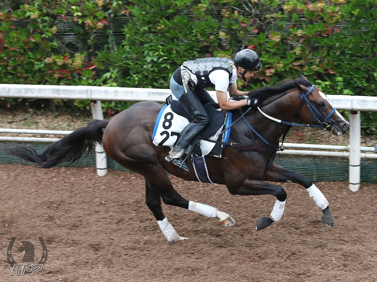 サンライズホープの馬体写真