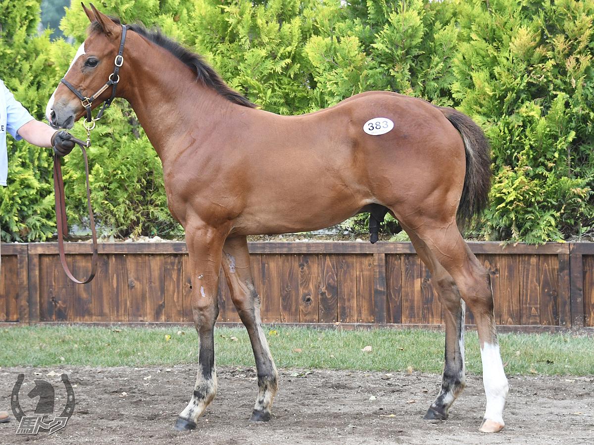 エブリワンブラックの馬体写真