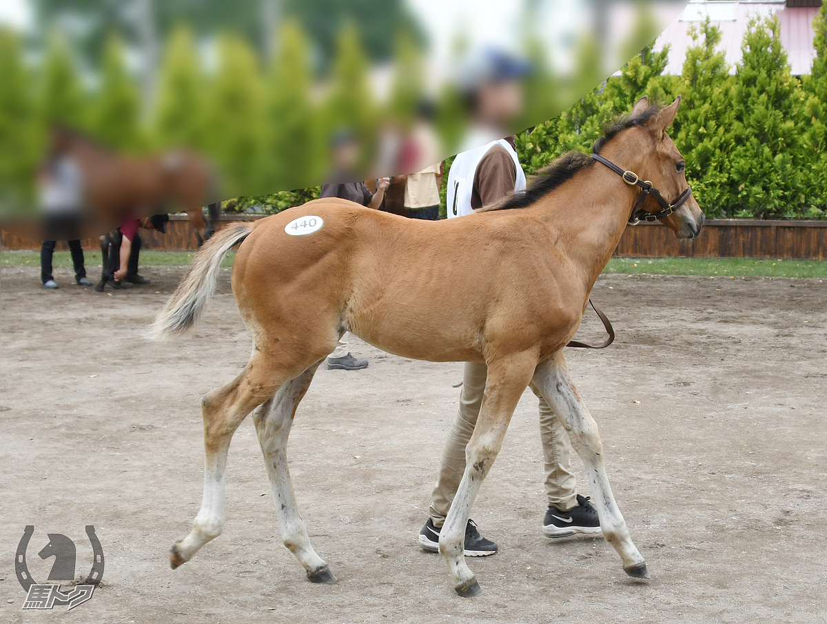 ソルレオーネの馬体写真