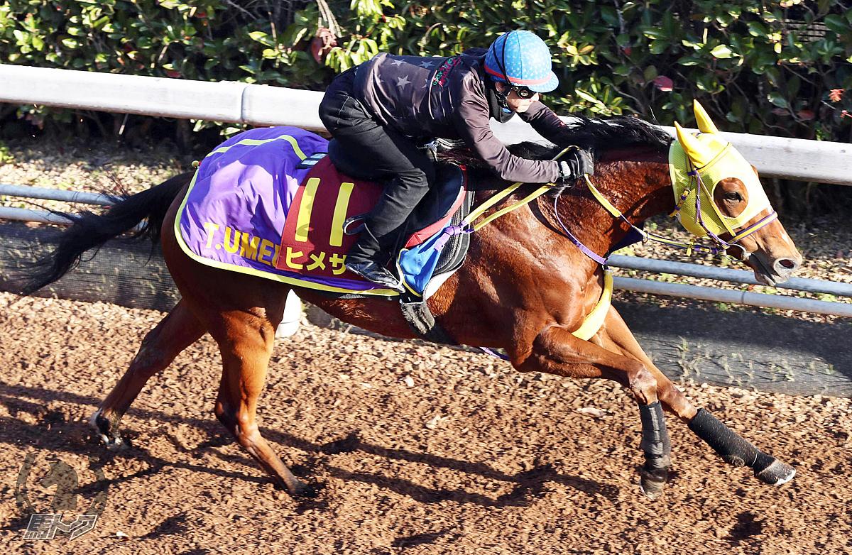 ヒメサマの馬体写真