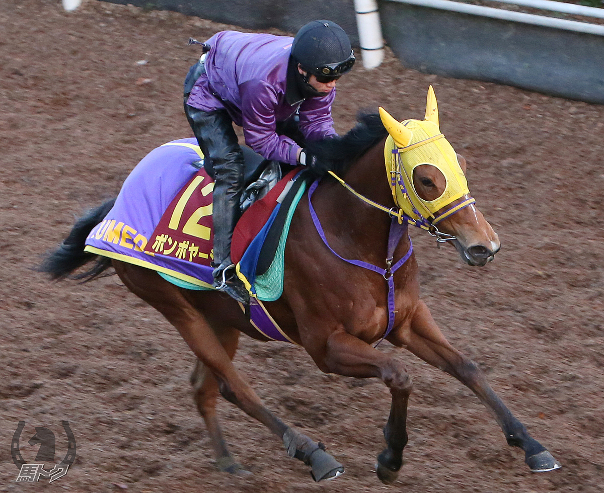 https://umatokuimg.hochi.co.jp/horseimages/2017/2017101121/2017101121_2019-12-05.jpg