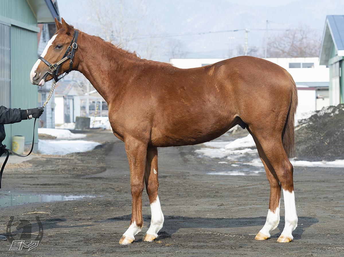 メガファラヴァハーの馬体写真