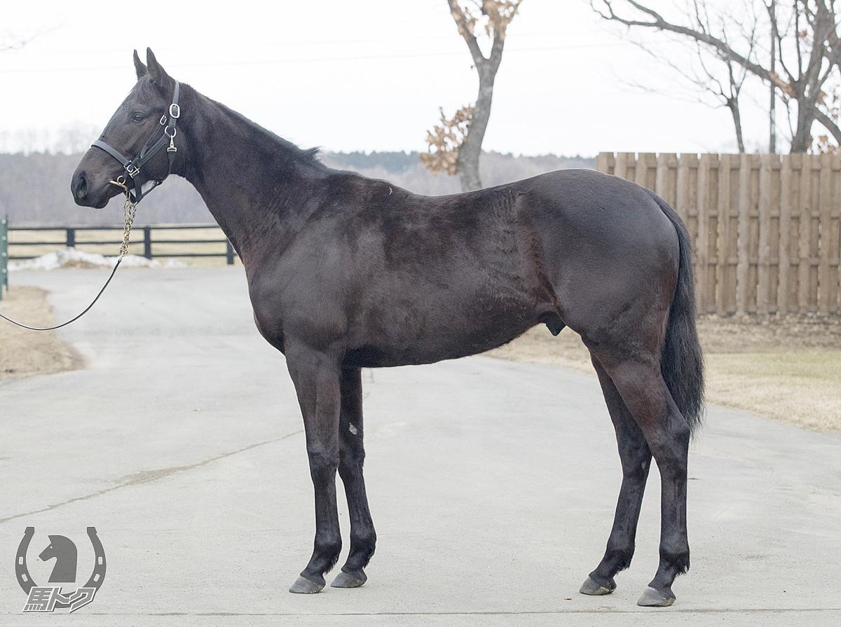 レッドライデンの馬体写真