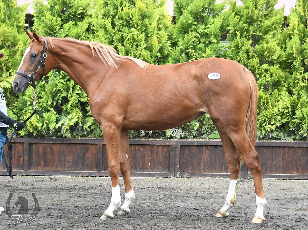 マオノエピの馬体写真