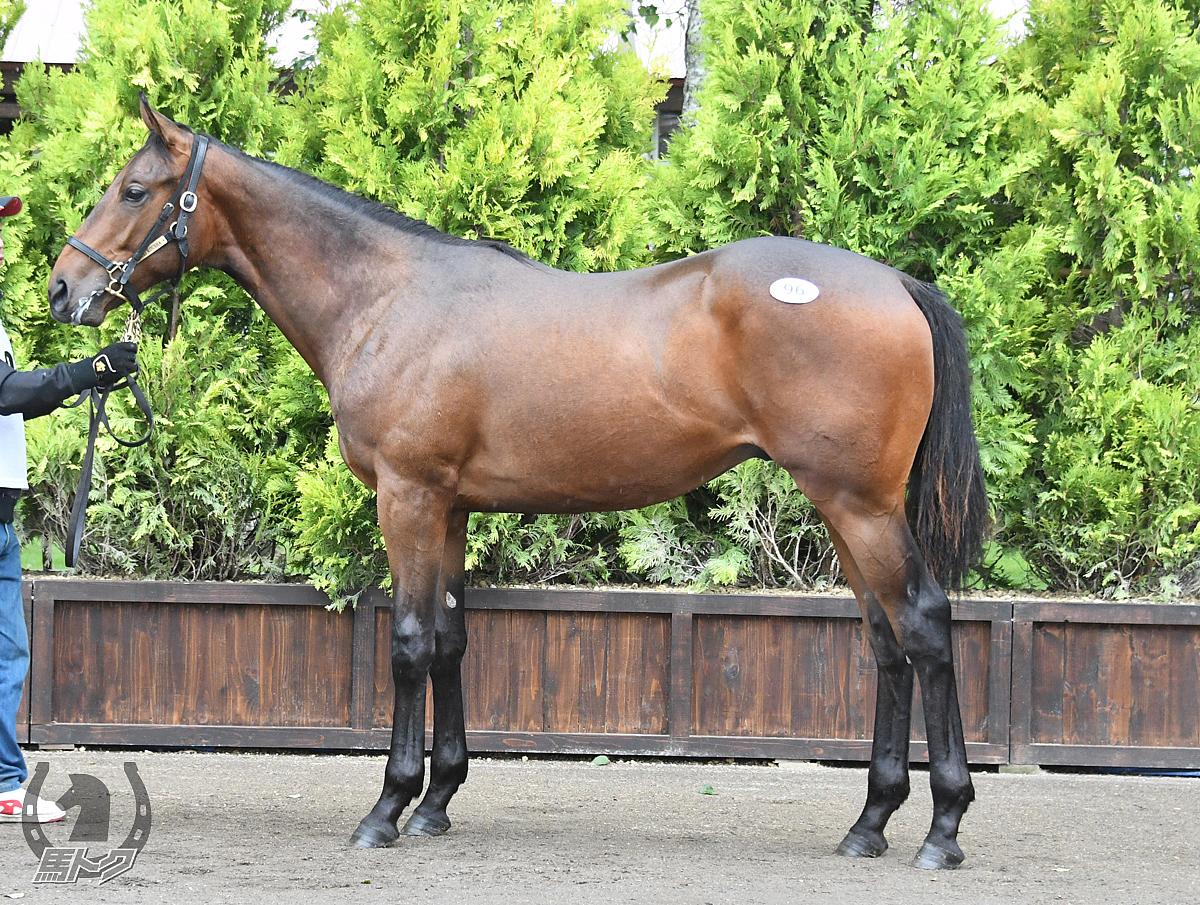 タンバヴェルドの馬体写真