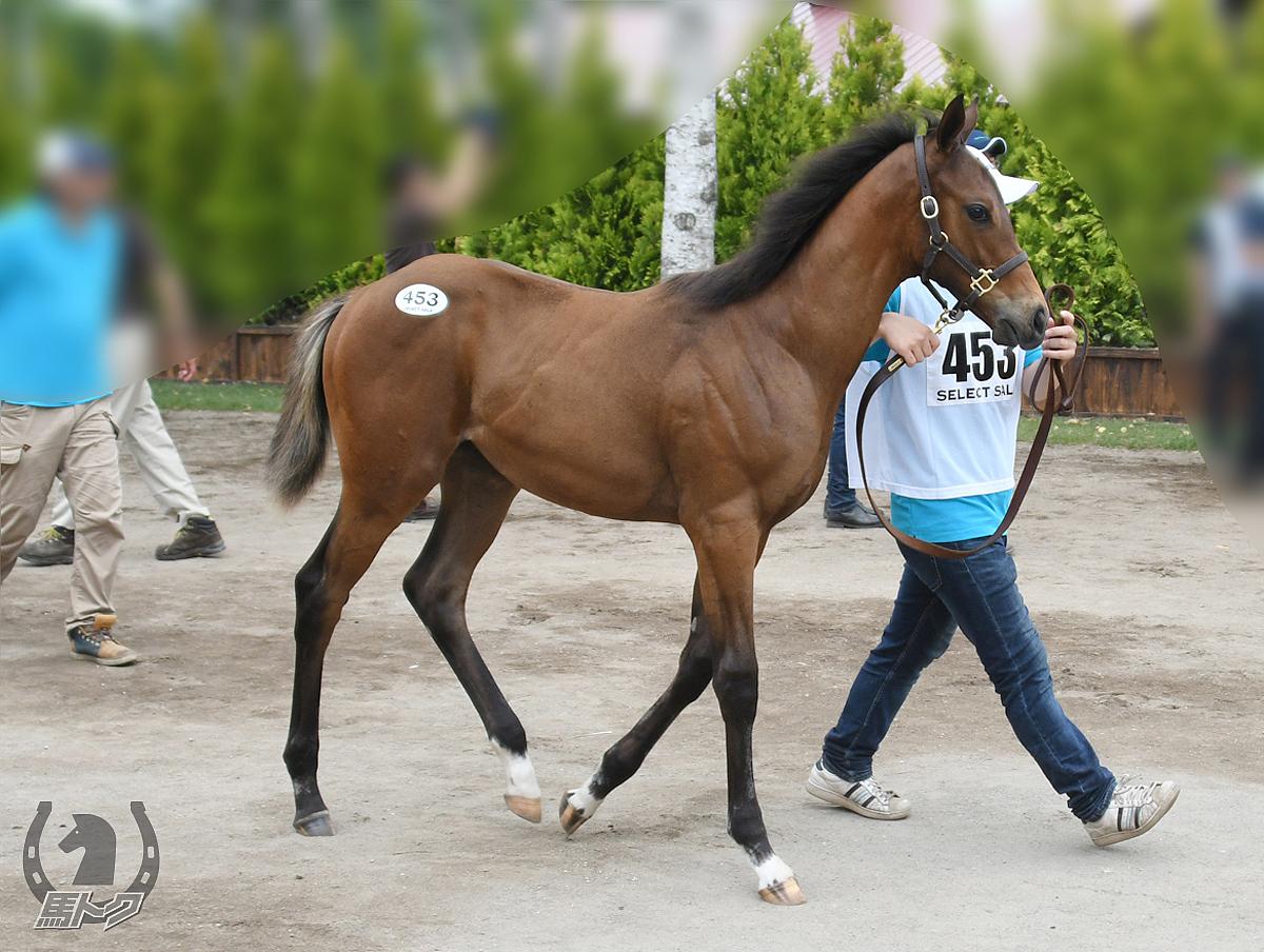 ホシムスメの馬体写真
