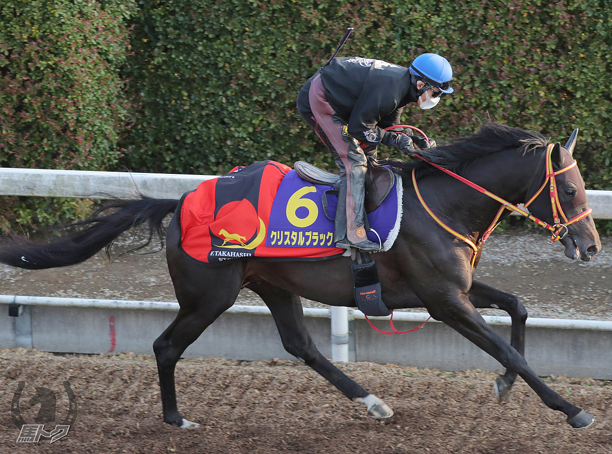 クリスタルブラックの馬体写真