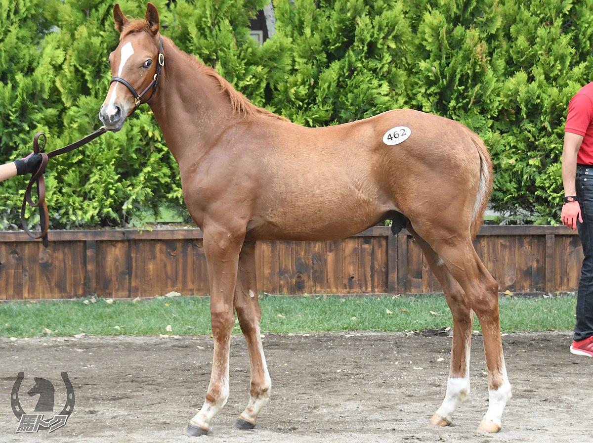 ラストマンの馬体写真