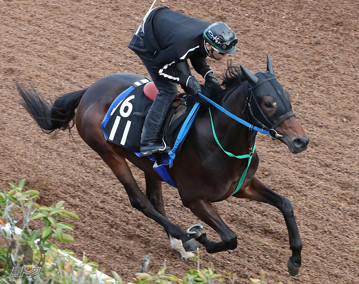 ゼンノジャスタの馬体写真