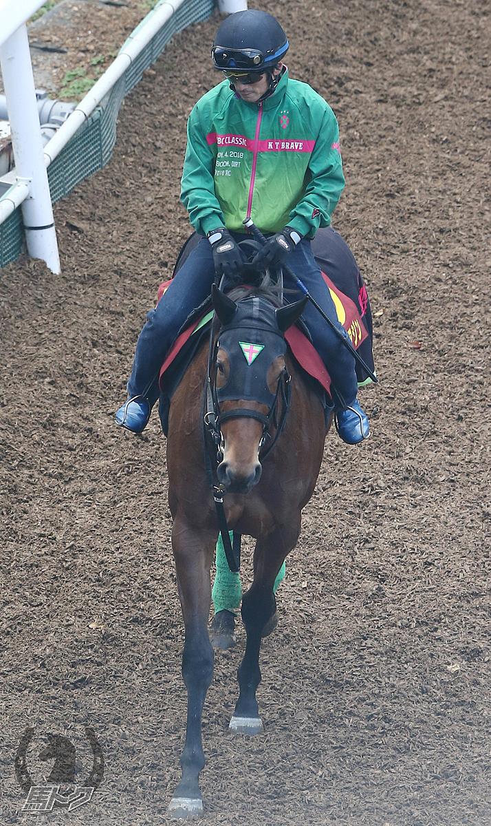 カワキタアジンの馬体写真