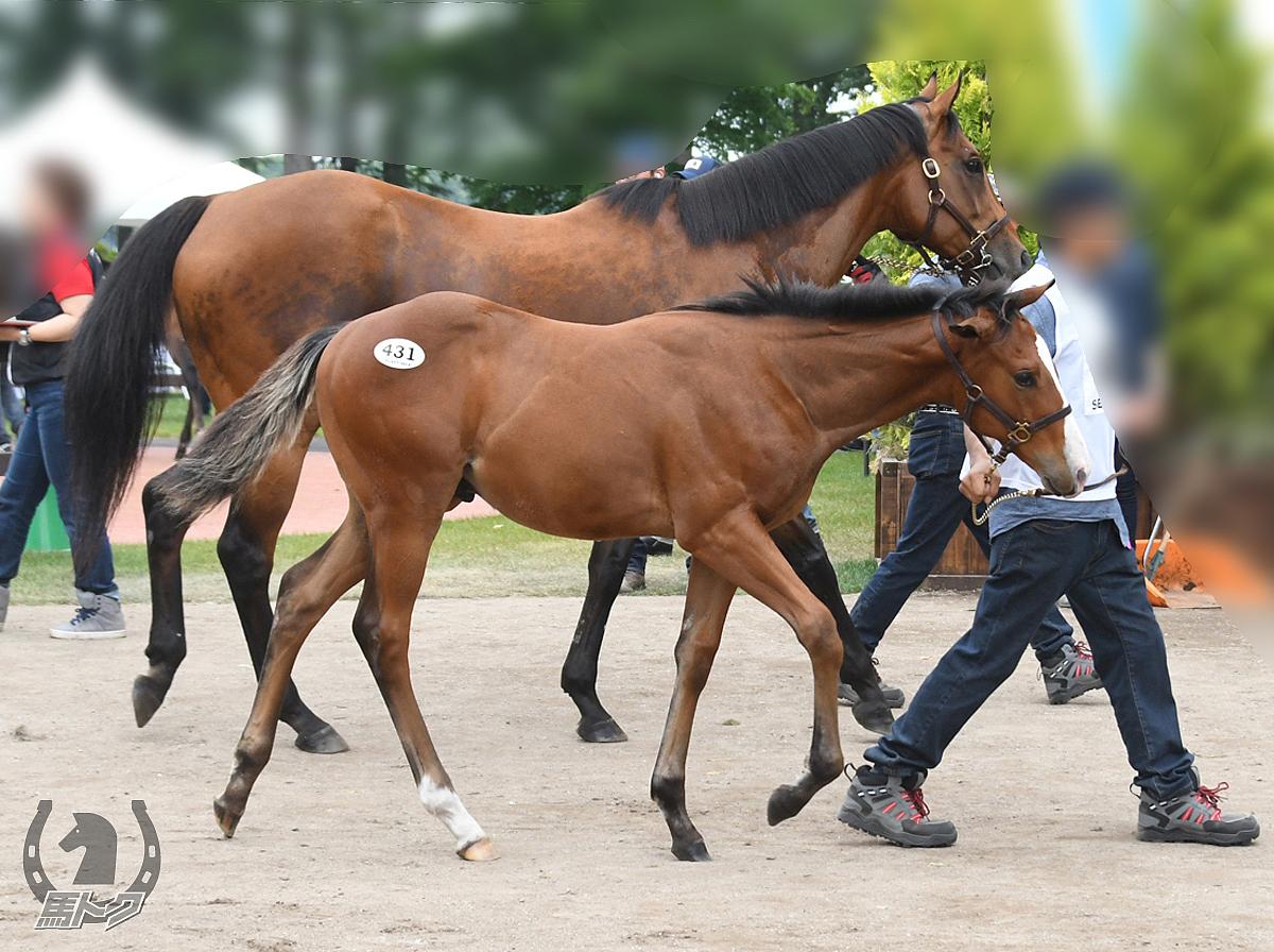 ベルダーイメルの馬体写真