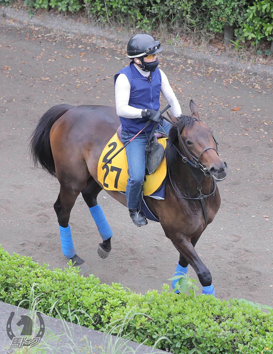 ウインキートスの馬体写真