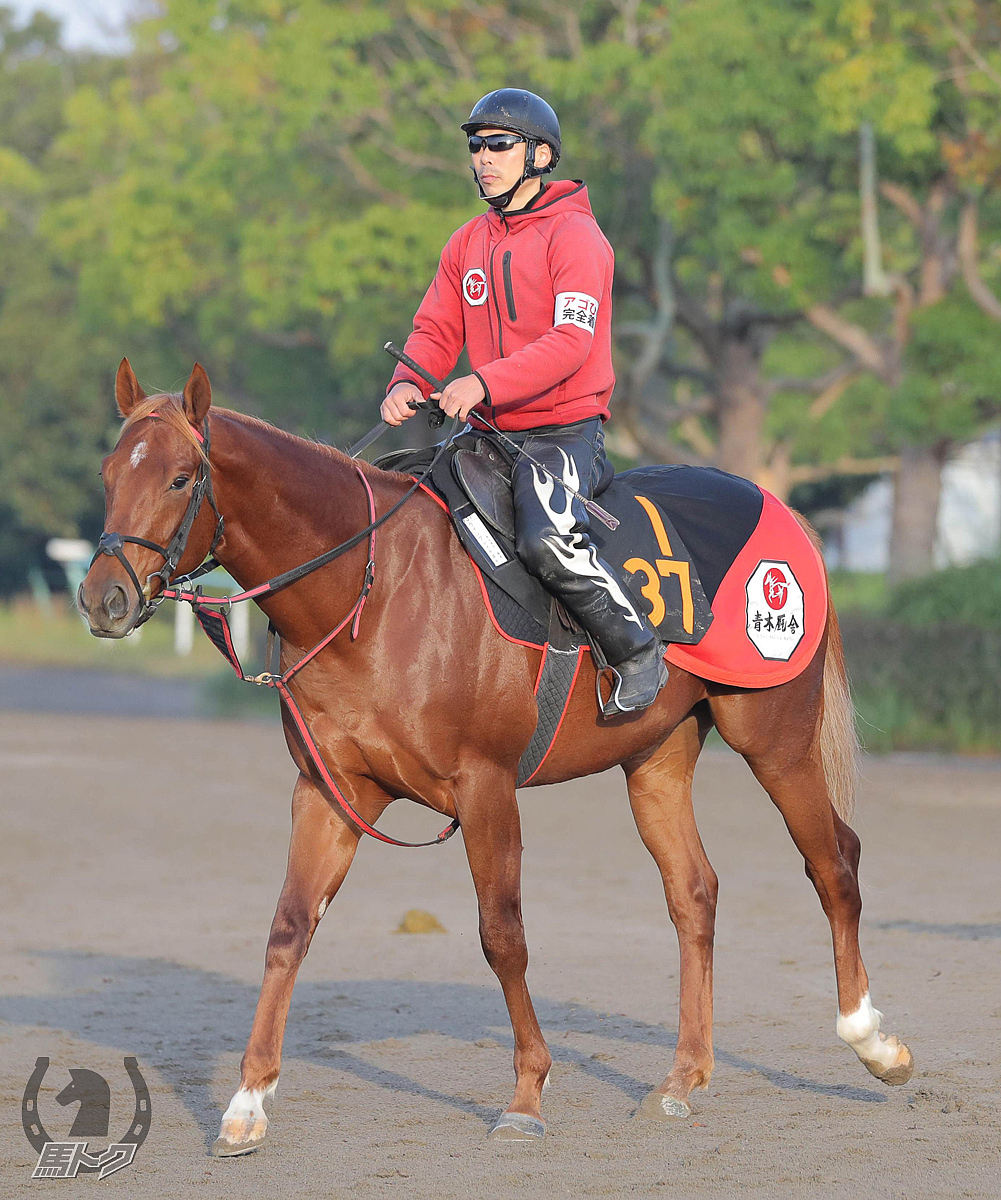 ウイングレイテストの馬体写真