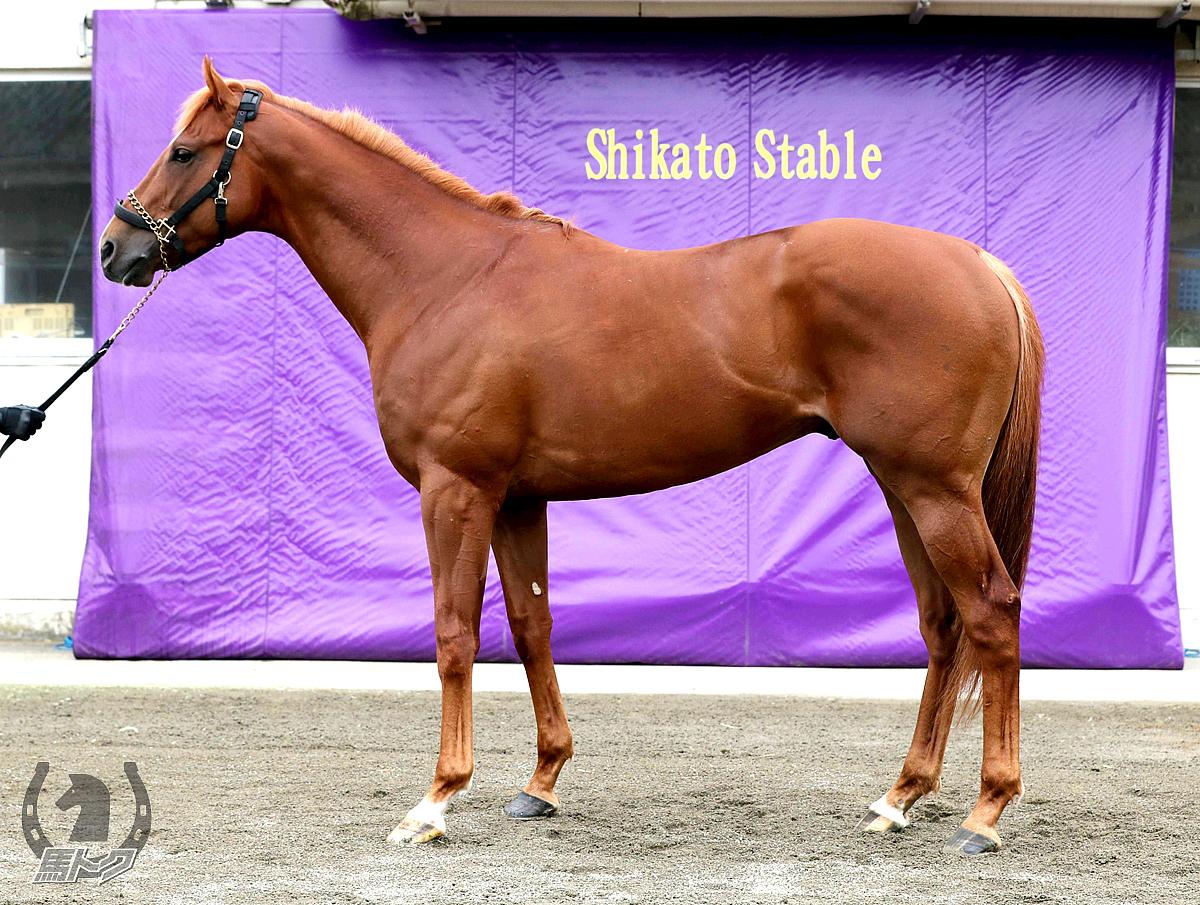 ウインカーネリアンの馬体写真