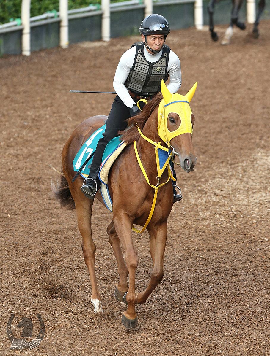 ウインオリヴィアの馬体写真