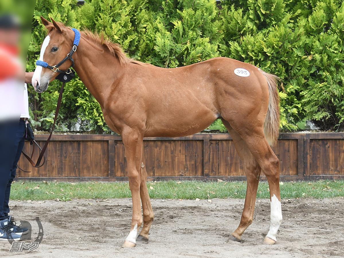 ジャスパーイーグルの馬体写真