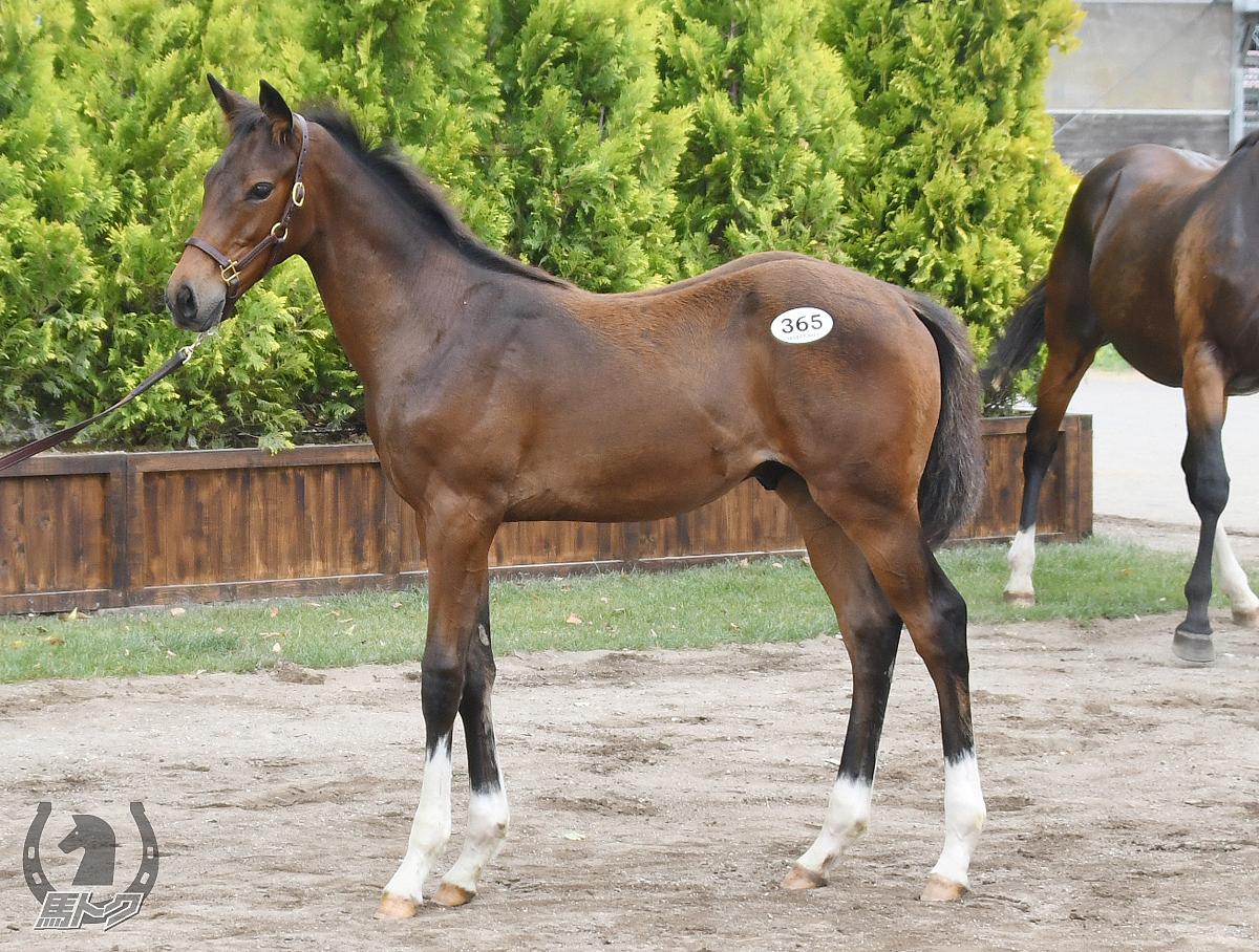 キクノフラッシュの馬体写真