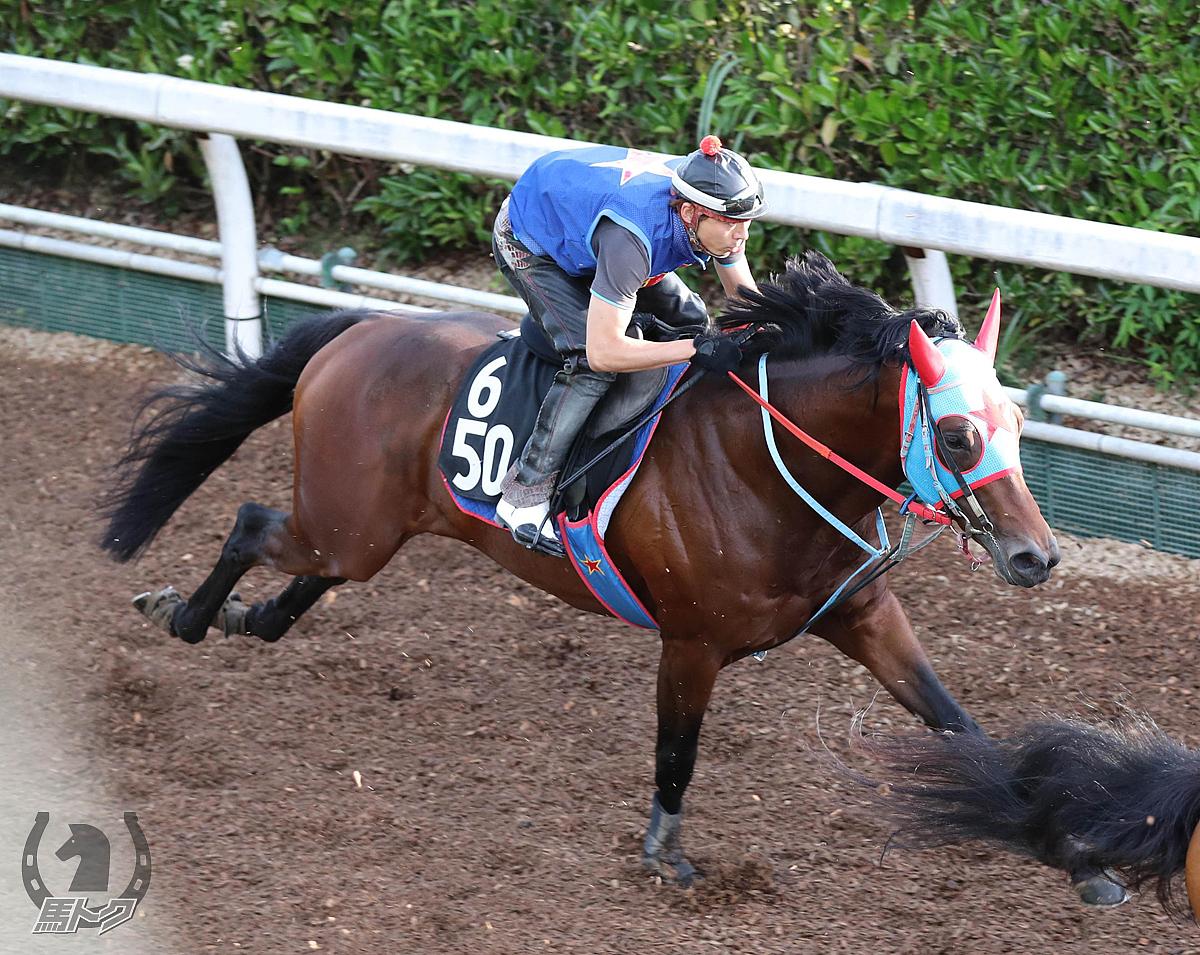 タガノビューティーの馬体写真