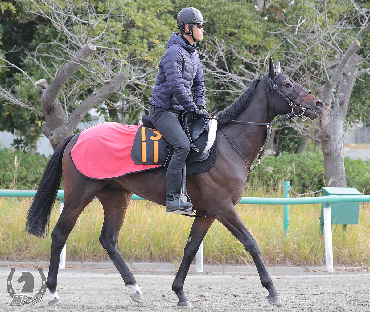 マイネルデステリョの馬体写真