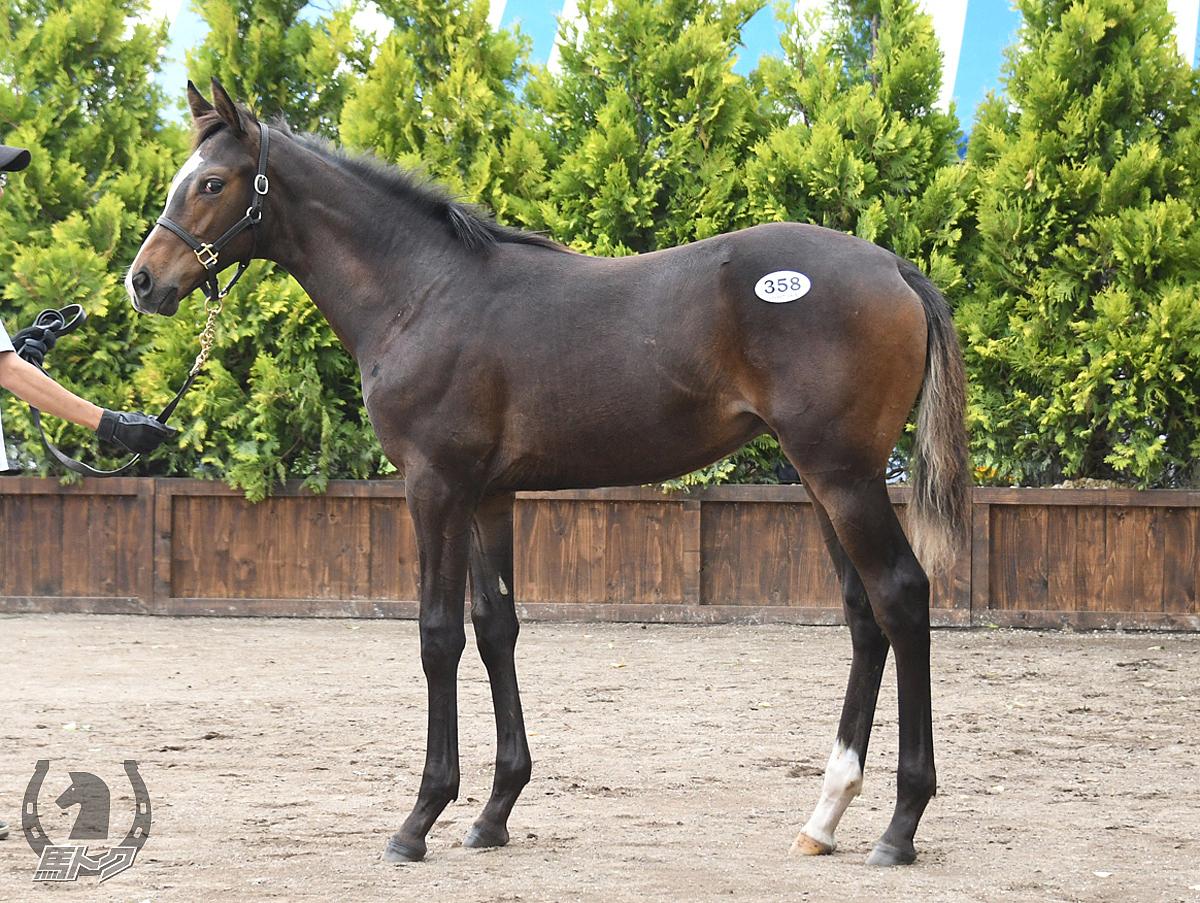 ルベルアージの馬体写真