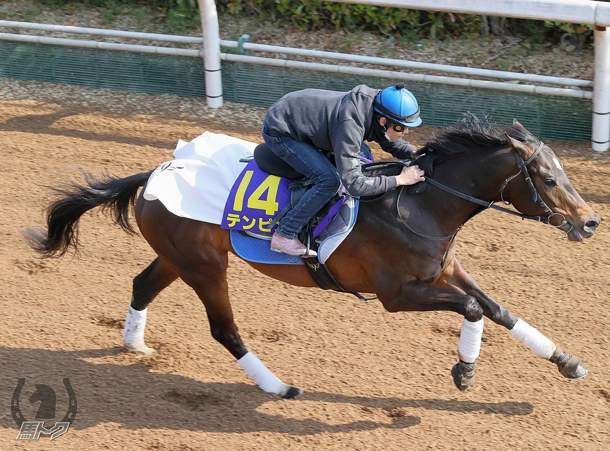 テンピンの馬体写真