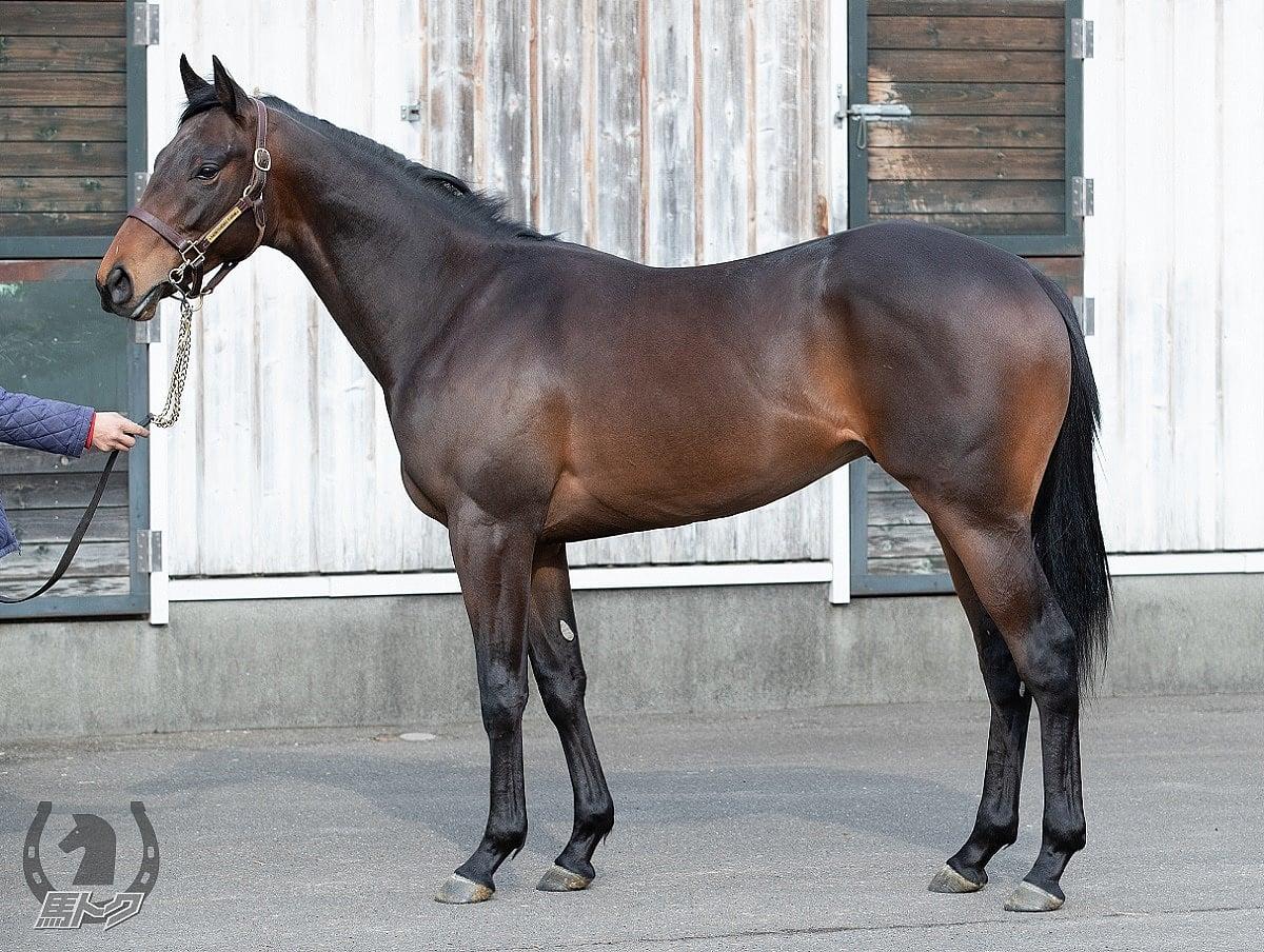 クァンタムリープの馬体写真