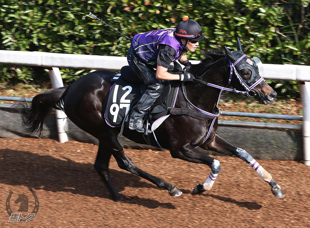 レジェーロの馬体写真