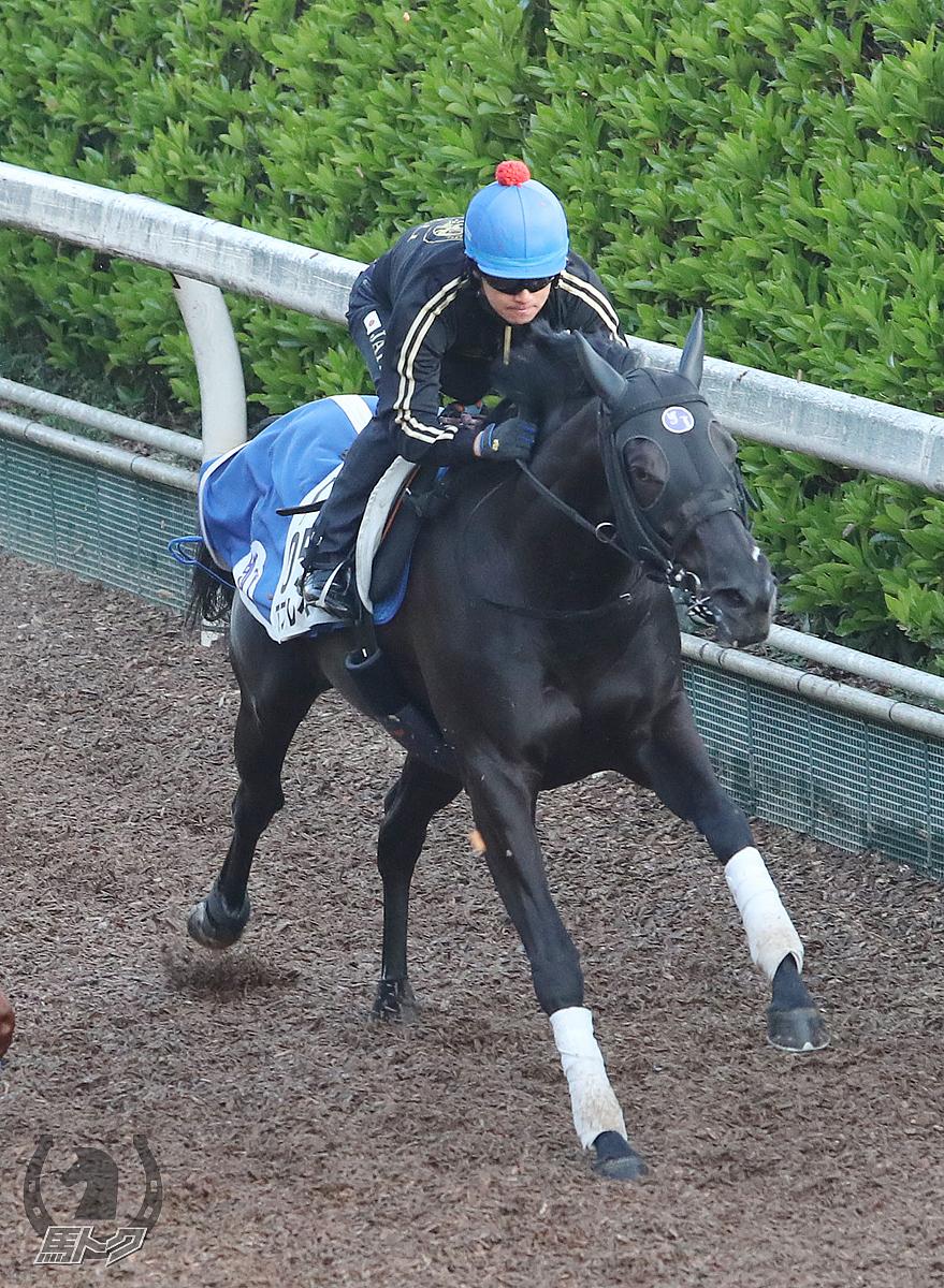 アブレイズの馬体写真
