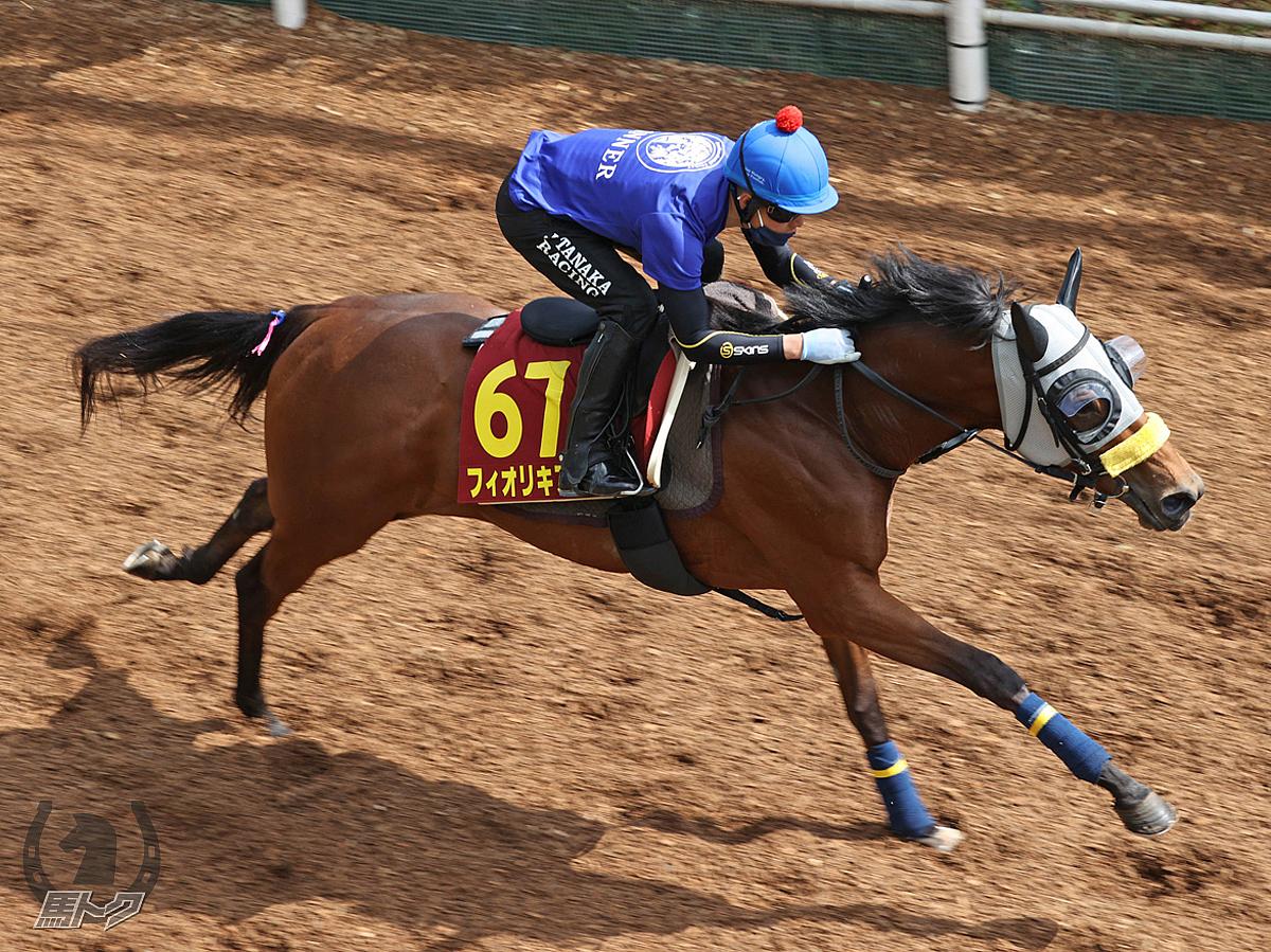 フィオリキアリの馬体写真
