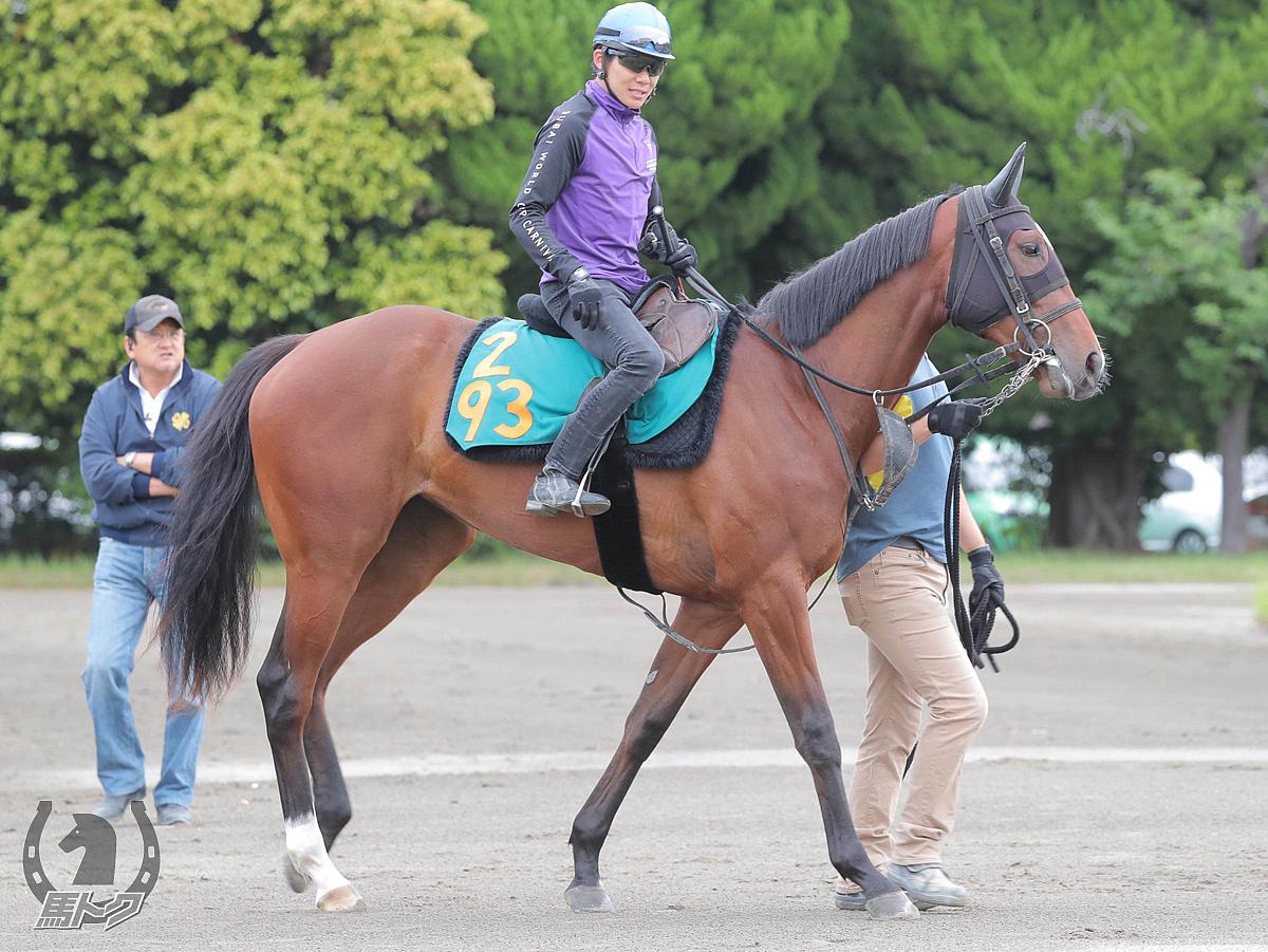 ディンブラの馬体写真