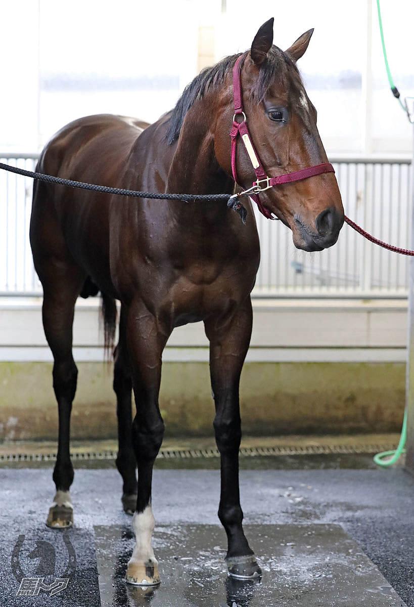 シャンドフルールの馬体写真