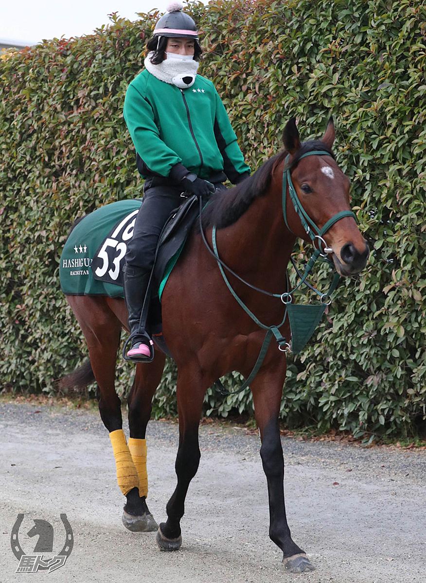 カバジェーロの馬体写真