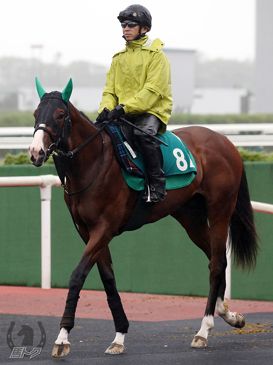 ビアンフェの馬体写真